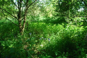 View from inside the food forest